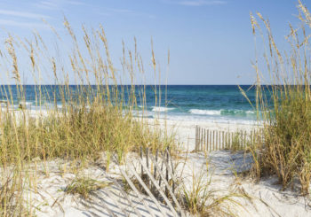 Dune Master Pan Task Force Needs Beach Business Owners for Committee