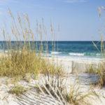 dunes taskforce
