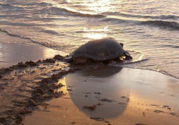 Sea Turtle-Friendly Lighting